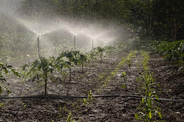 Sprinkler system set up by amaris group in toronto